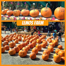 Pumpkin Patch Farm Half Moon Bay by Silicon Valley Toddler And Beyond Pumpkin Patch Report Lemos