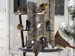 Bird feeding The good the bad and the ugly News Journal