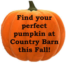 Pumpkin Patch Denver Pa by Pick Your Own Pumpkin U2014 Country Barn