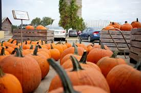 Pumpkin Patch Near Caledonia Mi by Ripe For The Picking Farms Orchards Offer Fall Family Fun