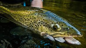 best sink tip fly line fly fishing gink and gasoline how to