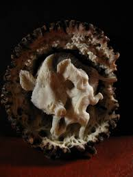 Moose Shed Antler Forums by Moose Antler Carvings Big Game Hunt