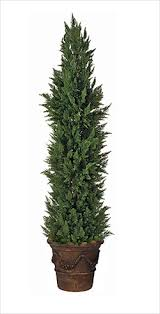 Fresh Cut Christmas Trees At Menards by Topiary Trees Topiary Forms Live U0026 Artificial Indoor U0026 Outdoor