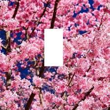 Japanese Cherry Blossom Bathroom Set by Shop Japanese Cherry Blossom Decor On Wanelo