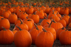 Pumpkin Patch Waco Tx 2015 by 100 Pumpkin Picking Maine 50 Best Pumpkin Patch Activities