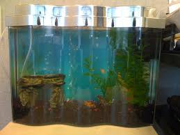 Extra Large Aquarium Decorations by How Does One Care For Fancy Goldfish Aquarium Pets