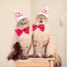Finnegan and Alice birthday wishes Pinterest