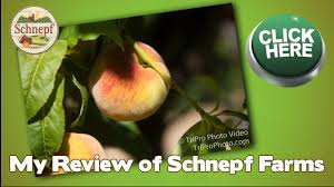 Schnepf Farms Halloween 2017 by Schnepf Farms Review In Queen Creek Az My Reviews From Schnepf