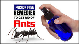How to rid of ants permanently in your house – Home reme s