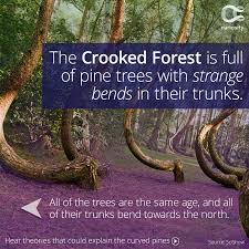 Why Do The Trees Bend In The Crooked Forest? Expert Claims Mysterious Bent Trees Were Secret Native Americans Crooked Forest Wikipedia Stp77089 Greenery And Tree Trunks In Forest Karjat Mahashtra Indian Bent Trees History Or Legend Show Me Oz Larry The Lorry More Big Trucks For Children Geckos Garage New Trucks Bodies Equipment Trailers Seen At Wasteexpo How To Fix A Leaning Tree I Love The Wooden Beds Rarin To Go Ford Mysterious Are Actually American Trail Markers Wind Stock Images 542 Photos Bend Diamonds Ieee Spectrum Black White Alamy