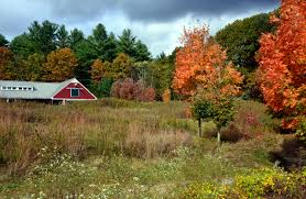 Greater Merrimack Valley   Great Brook Farm State Park Nancy The Barn At Spring Brook Farm Animalassisted Acvities Hemlock Ultimate Equestrian Nature Lovers Estate Yoshi Farms For City Kids Jackson House Innjackson Our Programs Maple Cream Mayfair Greater Merrimack Valley Great State Park Cherry Canton Connecticut In Love Every Time I Pass By