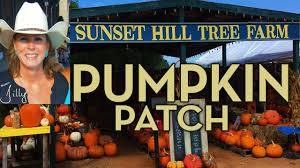 Real Pumpkin Patch Dfw by North Texas Pumpkin Patch South Of Dallas Fort Worth Youtube