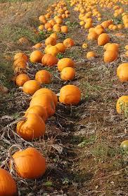 Pumpkin Patch Cincinnati by Pumpkin Patch Daycare Cincinnati Ohio