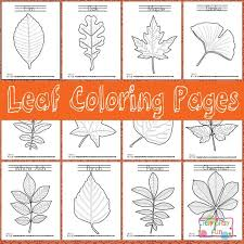 FREE Leaf Identification Coloring Pages