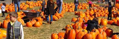 Pumpkin Patch Homer Glen Il by America The Beautiful Series The Best Pumpkin Patch In Every U S