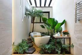 pflanzen im badezimmer die besten vorschläge für sie