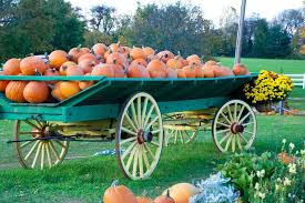 Pumpkin Picking Nj by Where To Go Pumpkin Picking And Apple Picking In Nj