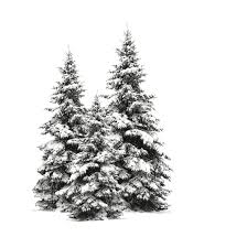 Christmas Tree Cutting Permits Colorado Springs by Real Vs Artificial Trees Which Christmas Tree Is Best