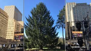 Christmas Tree Rockefeller 2017 by Drumroll Please Your 2017 Rockefeller Christmas Tree Has Been