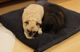 best orthopedic dog beds in 2017 tempurpedic memory foam