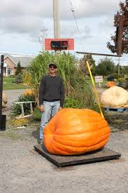 Atlantic Giant Pumpkin Taste by 2017 Seed Pack Annapolis Valley Giant Vegetable Growers