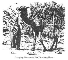 Threshing Floor Bible Meaning by Swartzentrover Com Wight Manners And Customs Of Bible Lands
