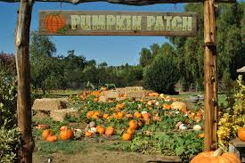 Pumpkin Patch Rides by Where To Find The Best Pumpkin Patches In San Diego Lajolla Com