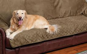 Kohls Pet Chair Covers by Pet Sofa Cover Bed Bath And Beyond Photos Hd Moksedesign
