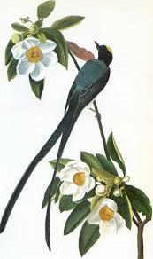 Vintage Audubon BirdsAudubon PrintsBird