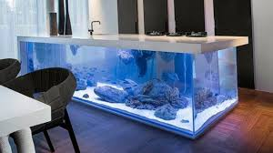 Intresting 40 Aquarium Fish Ideas 2017 | Home Design Fish Tank And ... 60 Gallon Marine Fish Tank Aquarium Design Aquariums And Lovable Cool Tanks For Bedrooms And Also Unique Ideas Your In Home 1000 Rousing Decoration Channel Designsfor Charm Designs Edepremcom As Wells Uncategories Homes Kitchen Island Tanks Designs In Homes Design Feng Shui Living Room Peenmediacom Ushaped Divider Ocean State Aquatics 40 2017 Creative Interior Wastafel