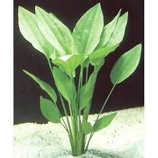 plantes aqua collection on ebay
