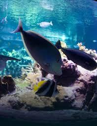 aquarium geant a visiter belgique la cité de la mer aquarium musée maritime à cherbourg normandie