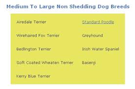 do all short haired dogs shed