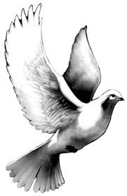 Black And Grey Flying Dove Tattoo Design