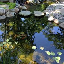 Aquascape Certified — Waterpaw - Pond, Patio, Landscape Beyonc Shares Stunning Behindthescenes Photos From Her Grammys Aquascape For A Traditional Landscape With Pittsford Ny And Aquascape Patio Ponds Uk 100 Images Pond Superb Pond Build In Dingtown Pa Ce Pontz Sons Contractors The Ultimate Backyard Oasis Inc Choosing The Perfect Water Feature Your Yard Features Aquarium Beautify Home With Unique Designs Certified Waterpaw Patio D R Excavating Landscaping Ponds Waterfalls Waters Edge Aquascaping Waterfalls Accsories