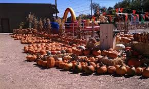 Colorado Pumpkin Patch by Five Colorado Pumpkin Patches Ripe For The Picking Westword