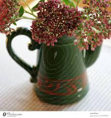 blumen und vase ein lizenzfreies stock foto photocase