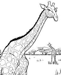 African Giraffe Coloring Page