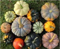 Varieties Of Pumpkins by The Ultimate Cheat Sheet On Everything Pumpkin Kimberly Snyder