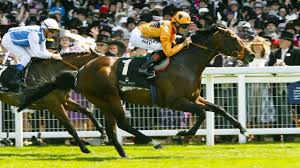 100 Canford Cliffs To Join Highlands Stud Roster Bloodstock