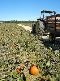 Hurricane Utah Pumpkin Patch by T B U0026 T And Little She October 2012