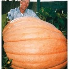 Dills Pumpkin Patch Columbus Ohio 100 best giant pumpkins images on pinterest giant pumpkin