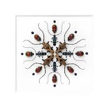 20 Best Christopher Marley Insect Art Images On Pinterest