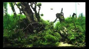 SuperWen's 2012 Aquascape - Mononoke Forest - YouTube Aquascape Of The Month June 2015 Himalayan Forest Aquascaping Interesting Driftwood Placement Aquascapes Pinterest About The Greener Side Aquascaping Design Checklist Planted Tank Forum Simons Blog Decoration Bring Nature Inside Home Ideas Downhill By Arie Raditya Aquarium 258232 Aquaria Creating With Earth Water Fire Air Space New Aquascapemarch 13 2016page 14 Page 8 Aquapetzcom Magical Youtube 386 Best Tank Images On Aquascape