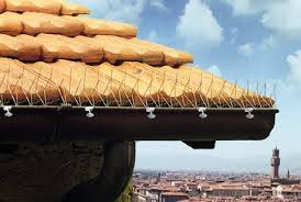 how to keep birds away from roofs and gutters with anti bird
