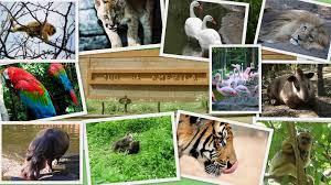 El Baile De Los Animales Las Canciones Del Zoo 3 El Reino