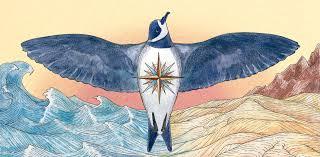 100 Seabirds Food Truck The Storm Petrels Secret Nests In The Atacama Desert The