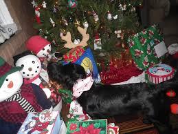 Mr Jingles Christmas Trees West Palm Beach by Dave U0027n U0027kathy U0027s Vagabond Blog December 2012