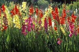 when to plant summer flowering bulbs outdoors