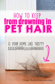Sheltie Shedding In Winter by How To Keep From Drowning In Pet Hair Congas Rave And Buckets